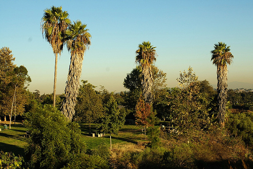 elysian-park