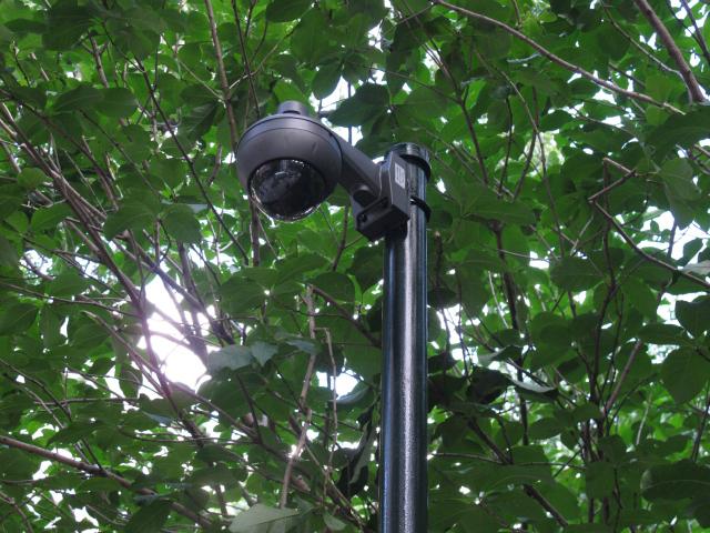 park surveillance